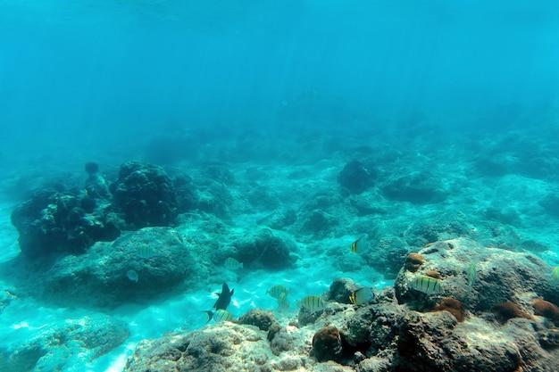 형형색색의 물고기가 함정과 죽은 산호 사이를 헤엄칩니다. 안다만 니코바르 제도. 닐, 해브록. 스노클링과 다이빙의 개념입니다. 몰디브 수중 야생 동물, 해양 생물, 모험 스노클링