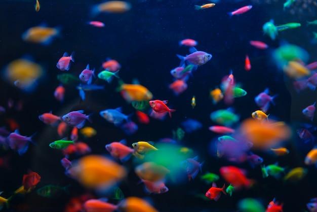 Разнообразие красочных рыб в аквариуме крупным планом, зоомагазин