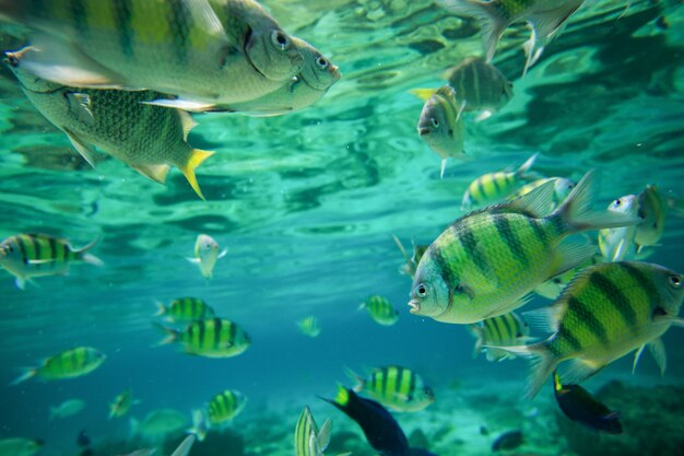 Colorful of fishes with ripples of sunlight reflected on the ocean floor