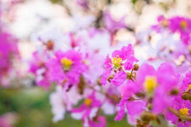 カラフルな花と花