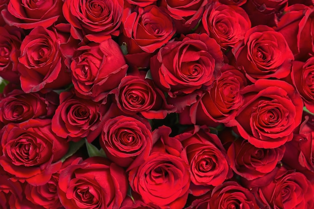 Красочный букет из красных роз для использования в качестве фона.