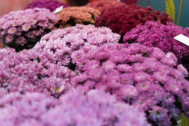 Colorful flower composition with chrysanthemums