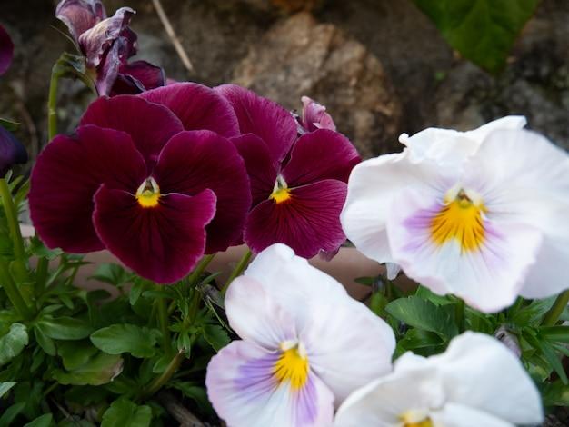 植木鉢にカラフルな花