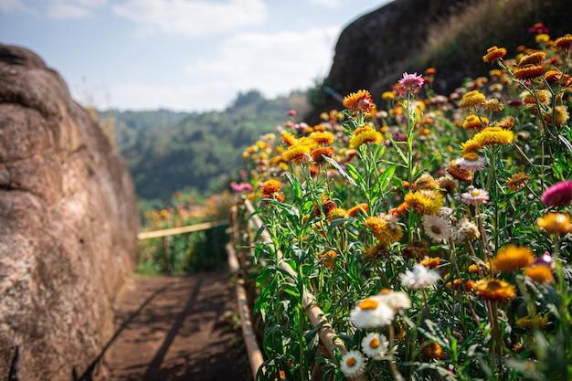 Colorful flower landscape