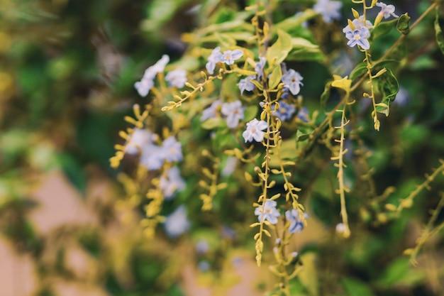 나뭇가지에 화려한 꽃입니다.