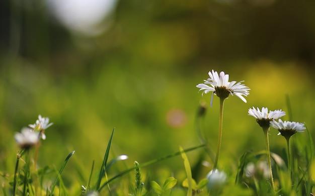 필드에서 화려한 꽃 일몰