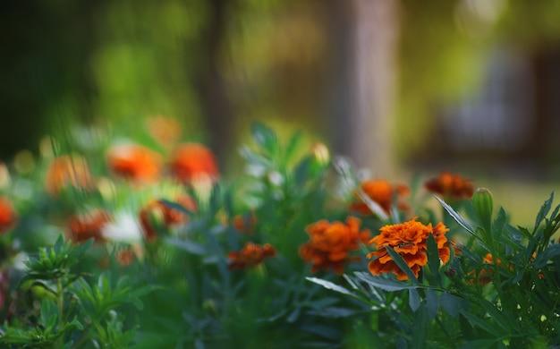 필드에 화려한 꽃 일몰