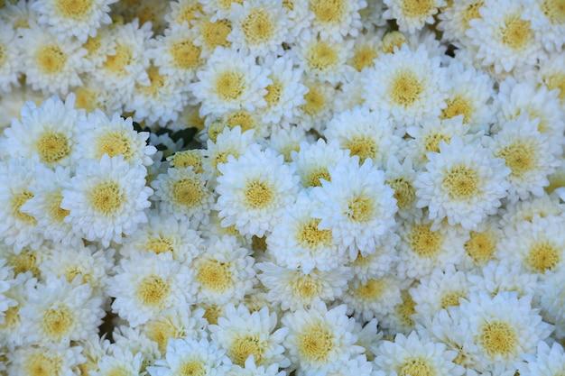 화려한 꽃과 잎 배경 디자인