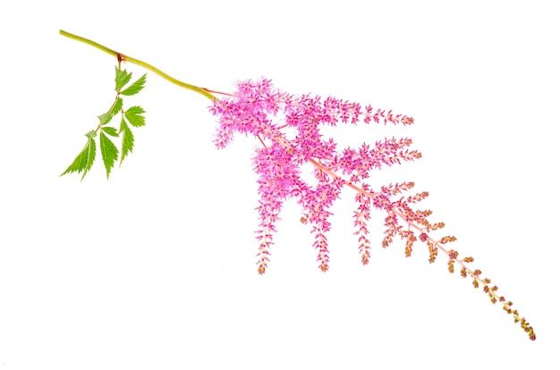 色とりどりの花とアスティルベの葉。スタジオ写真