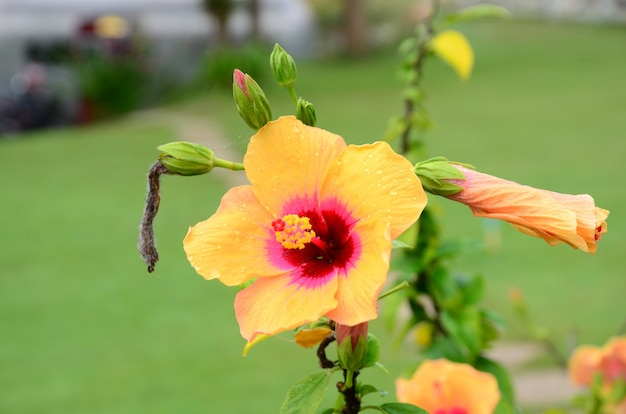 色とりどりの花と朝日