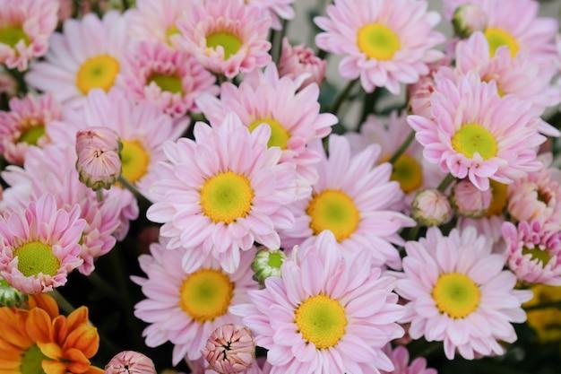 Красочные цветы хризантемы с градиентом для фона