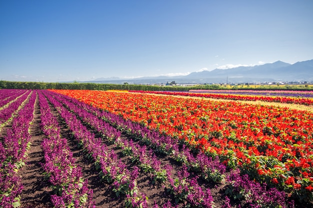 Colorful flowers in the field and blue sky.