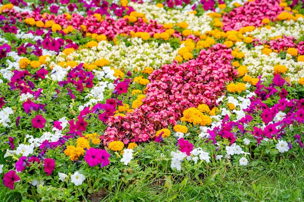 Colorful flowers in the garden. cropped photo. summer landscape. pink, yellow white flowers and green grass.