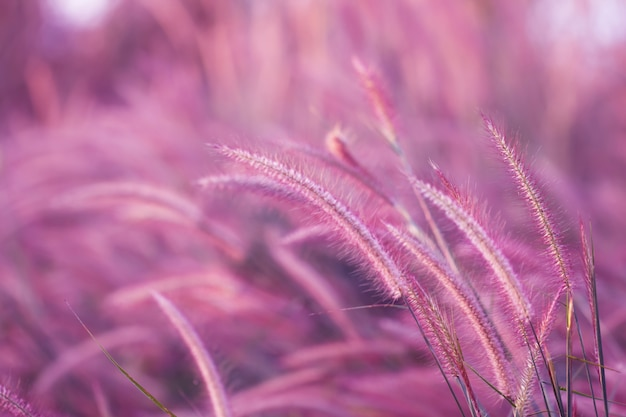 Colorful flowers grass for background