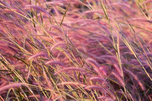 Colorful flowers grass made with gradient for background,abstract,texture,soft and blurred style