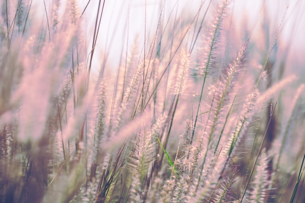 Colorful flowers grass made with gradient for background,abstract,texture,soft and blurred