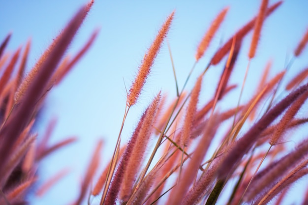Colorful flowers grass made with gradient for background