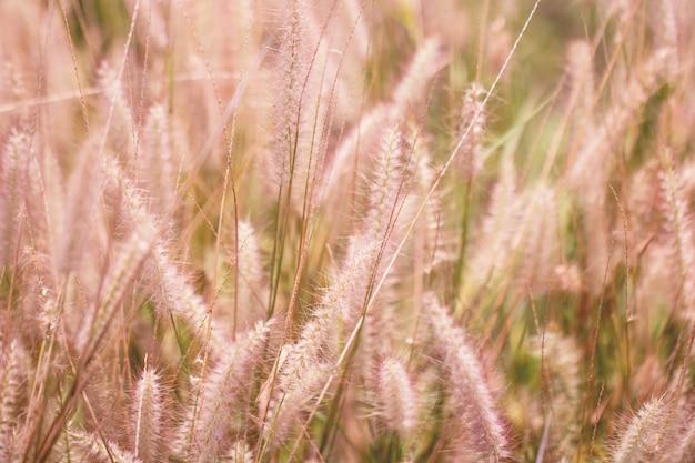 Цветастая трава цветков сделанная с градиентом для предпосылки