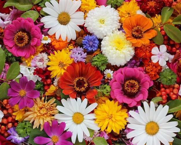 Colorful flowers, top view.