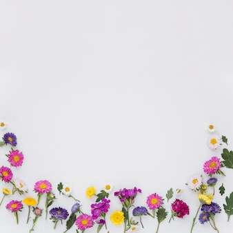 Colorful flowers on white