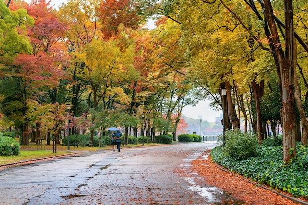 秋の公園の色とりどりの葉。秋の季節。