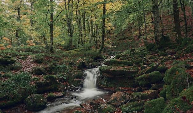 Colorful forest in autumn in the irati jungle. colorful forest in autumn. colorful beech and fir forest in autumn