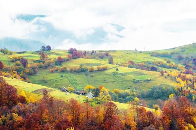 짙은 회색 안개로 덮인 따뜻한 카르파티아 산맥의 다채로운 숲