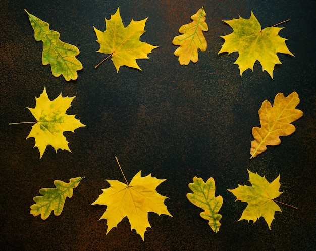 Colorful frame of fallen maple and oak leaves on a dark background with space for text