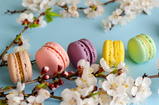 Colorful french macarons or macaroons decorated with blooming apricot flowers on pastel blue