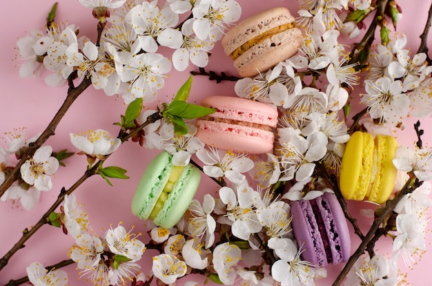 Colorful french macarons or macaroons decorated with blooming apricot flowers on pastel pink