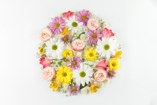 Colorful fresh flowers arranged in circle on white background