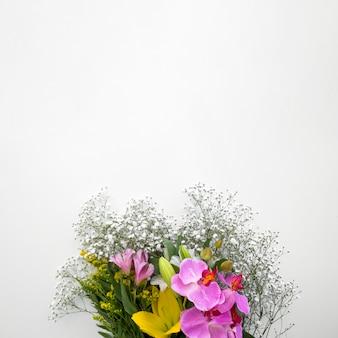 白い背景の下にカラフルな生花