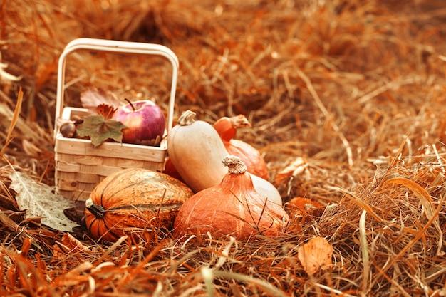 カラフルな果物や秋の野菜