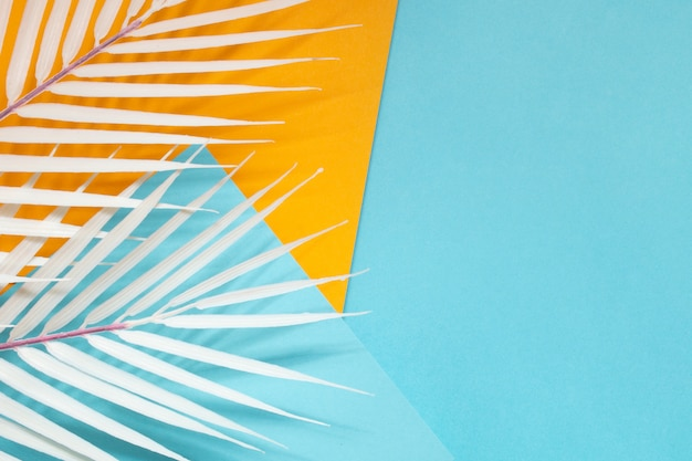 Colorful geometric cardboards with white palm leaves