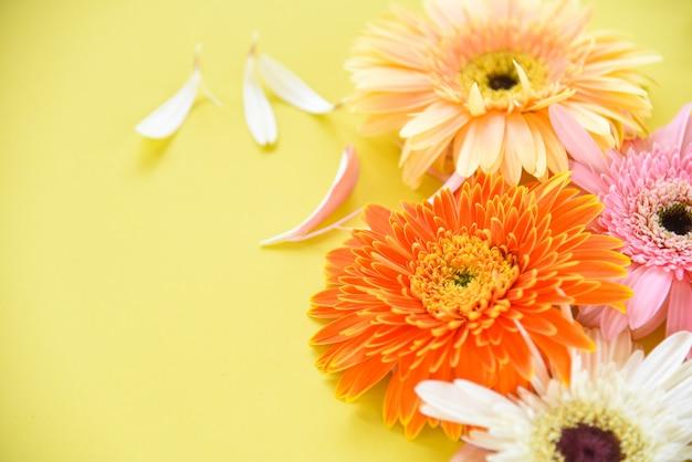 Разноцветные герберы весенние цветы летом красиво цветут на желтом фоне