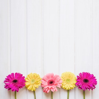 Colorful gerberas on white