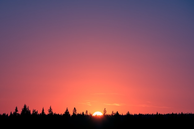 Colorful gradient at sunrise and forest silhouette