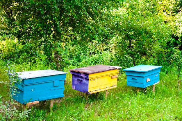 Colorful hives in apiary in a summer garden