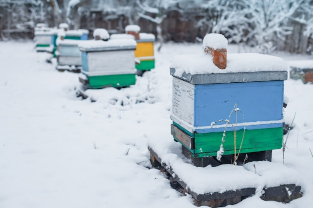 Colorful hives on apiary in winter stand in snow among snow-covered trees.