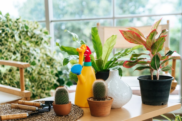 Colorful home gardening equipments on table in an indoor home greenhouse garden.