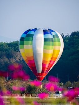 Colorful hot air balloon flying over cosmos flowers