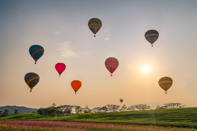 Colorful hot air balloons on cosmos field