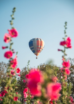 Colorful hot air balloons flying on garden