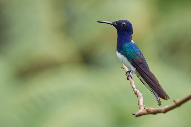 Красочный колибри отдыхает на ветке