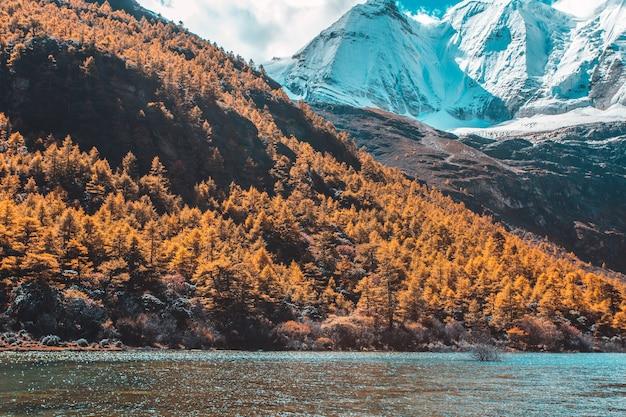 Yading 자연 보호 구역의 가을 숲과 설산의 화려한, 마지막 shangri la