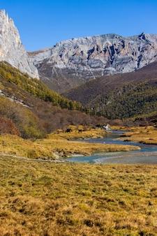 亜丁国家自然保護区の秋の森と雪山でカラフル