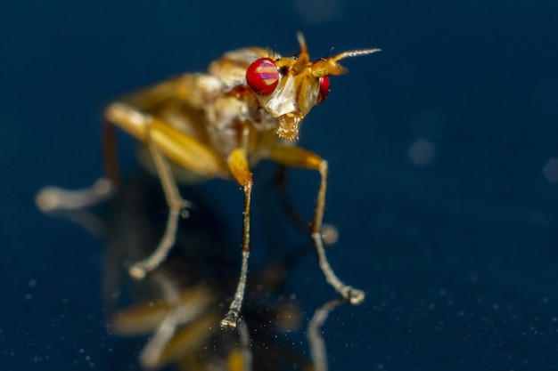 Colorful insect with red eyes close up
