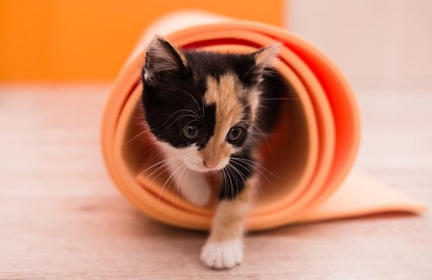 오렌지 요가 매트를 가지고 노는 다채로운 새끼 고양이