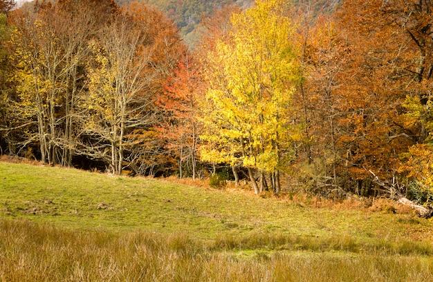 カラフルな風景、秋のブナの森林に黄色の葉と苔の緑色のカバー