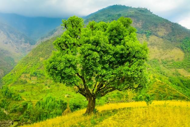 Красочное пейзажное дерево